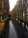 River Avon, Christchurch, New Zealand by Odille Esmonde-Morgan
