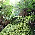 In the undergrowth, Blue Mountains, NSW by Martyn Baker   Martyn Baker Photography