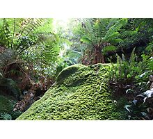 In the undergrowth, Blue Mountains, NSW Photographic Print