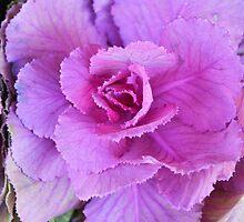 CABBAGE FLOWER by kazaroodie