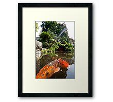 Swimming my way Framed Print