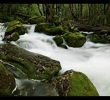 Mother Cummings River Pan by Robert Mullner