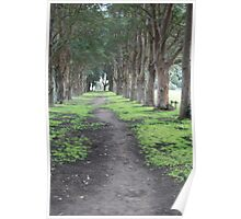 Avenue of Trees Morpoth Poster