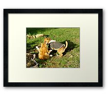 Putting on a bit of pudge there, Ginger! Framed Print