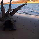 Along the shore by CourtneyMichell