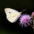 CABBAGE BUTTERFLY - remake by RGHunt