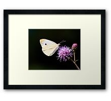 CABBAGE BUTTERFLY - remake Framed Print