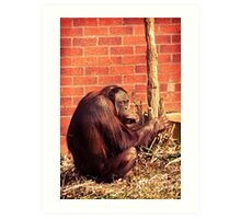 What you lookin' at? Art Print