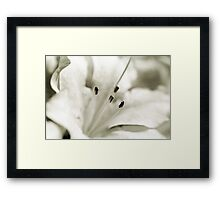 Flower in Black and White Framed Print