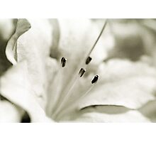Flower in Black and White Photographic Print