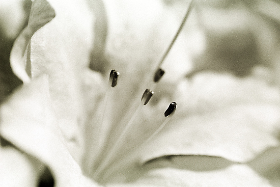 Flower in Black and White by Jim Haley