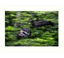 Duckpond - Hervey Bay Art Print