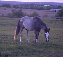 Spice of Life - Walking Horse Acres Ranch by abc197492