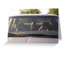 Dogs driving the truck Greeting Card