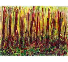 Burning Forest  Photographic Print