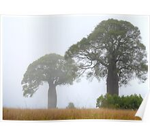 Boabs in the Mist - Boondooma, Queensland, Australia Poster