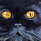 Salem by Lisa Marie Robinson