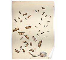 British moths and their transformations Henry Noel Humphreys and John Obadiah Westwood 1845 0367 Poster