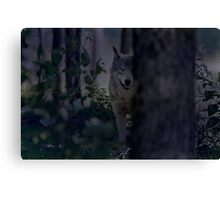 Night Visitor 2 Canvas Print