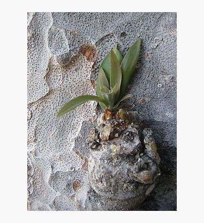 Untitled, California Photographic Print
