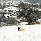 South Downs Sheep by Celia Strainge