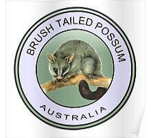 Australian brush tailed possum Poster