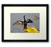 I Guess Anhinga's Can't Read Framed Print