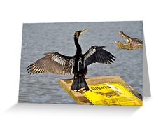 I Guess Anhinga's Can't Read Greeting Card