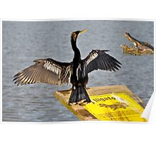 I Guess Anhinga's Can't Read Poster
