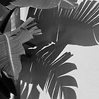 Palm Shadows by Caren