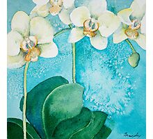 White Orchid Photographic Print