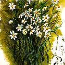 When Daisies Pied by  Janis Zroback