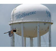 Tricolored Heron in front of Melbourne Water Tower Photographic Print