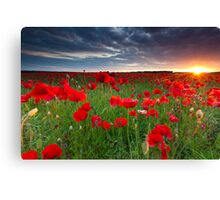 Sunset at the field Canvas Print