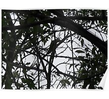 Wild Parrots for Bonnie - a Puzzle - Can you find the bird? Poster
