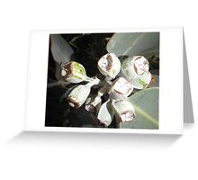 Grey Gum Greeting Card