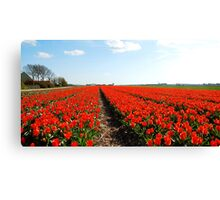 There will always be the tulips Canvas Print