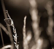 Clinging on for hope by fotozo