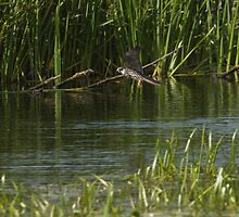Hobby Flying over Decoy Lake by kernuak