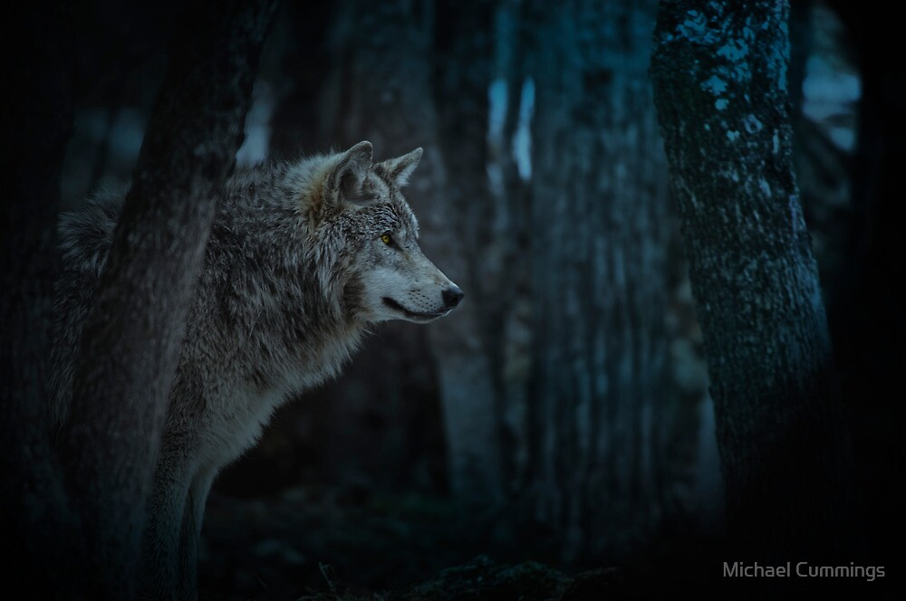 Night Visitor 3 - Psuedo Night Shot PS3 by Michael Cummings