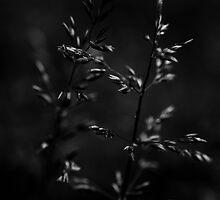 Grass 1 by Els Steutel