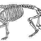 Hyeanodon horridus skeleton by Sean Craven