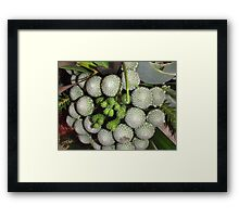 Freaky Fruit Framed Print