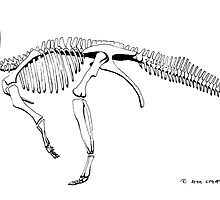 Protoceratops andrewsii, skeleton by Sean Craven