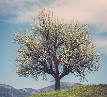 Blossom tree on a hill in Switzerland by mamate