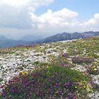 Mountain Wild Flower Garden by Nedim Bosnic