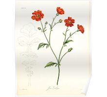 Floral illustrations of the seasons Margarate Lace Roscoe 1829 0284 Yeum Zuellyon Poster
