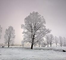 Frosted Willows by Kathy Wright