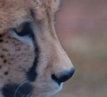 Cheetah Profile by alinewton