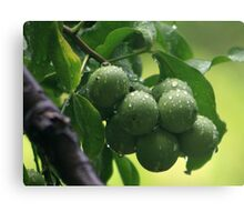 The Green Fruit Canvas Print